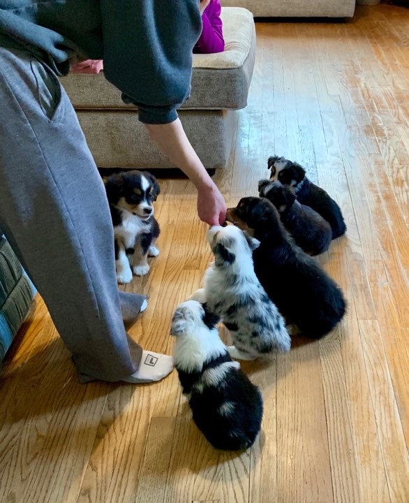 Our Puppy Culture Journey