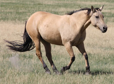 74 Ranch broodmares bred to Chex N Dun It or Busy Little Step